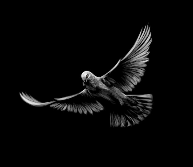 Flying white dove on a black background.  illustration