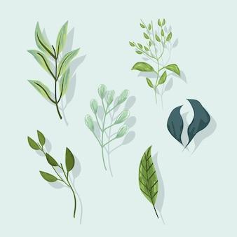 Листва ветви лист природа экология набор иконок