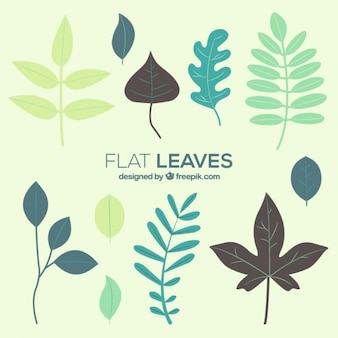 Foliage collection