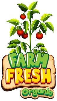 Дизайн шрифта для слова свежая ферма со свежими помидорами