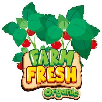 Дизайн шрифта для слова свежей фермы с красными помидорами