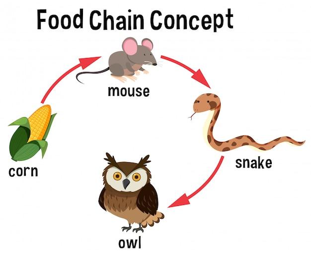 Схема концепции пищевой цепи