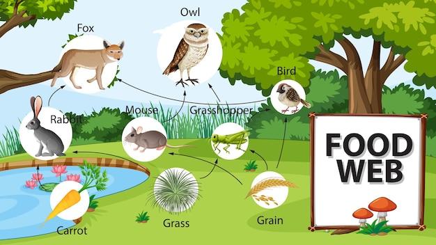 Concetto del diagramma della catena alimentare sullo sfondo della foresta