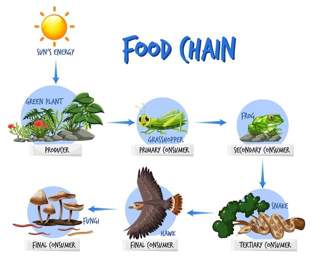 Концепция схемы пищевой цепи
