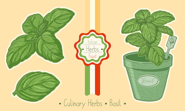 Food and culinary herb basil