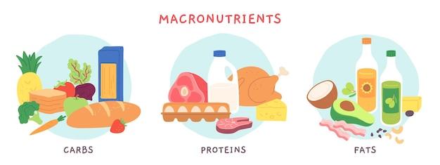 食品の主要栄養素。果物や乳製品を含む脂肪、炭水化物、タンパク質食品グループ。栄養素の複雑な食事療法のベクトルのインフォグラフィック。イラスト食用食材、料理用食料品栄養