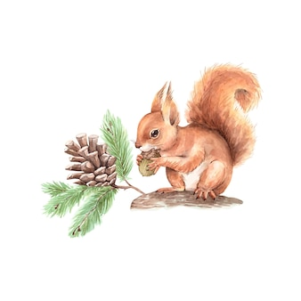 Forest animal squirrel sitting on a tree with a pine cone, vector watercolor