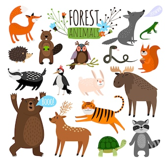 Forest animals. woodland cute animal set drawing vector illustration like moose or deer and raccoon, fox and bear isolated