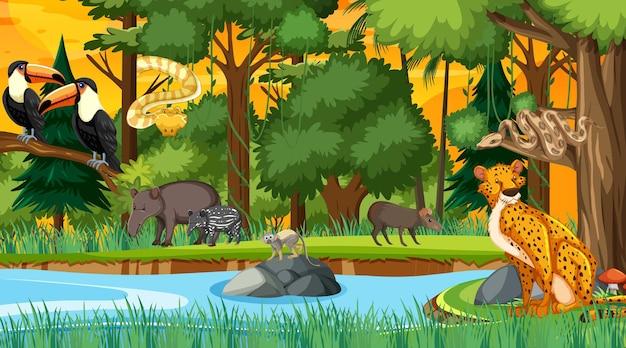 さまざまな野生動物と日没時のシーンの森