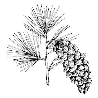 森の秋と冬の自然。トウヒの枝、どんぐり、松ぼっくり、落ち葉。孤立したイラスト要素。野生の花を描く手描き
