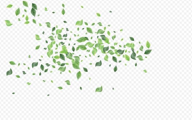 森の緑抽象的なベクトル透明な背景植物。風は国境を離れます。草が茂った葉の新鮮なポスター。板ばねテンプレート。