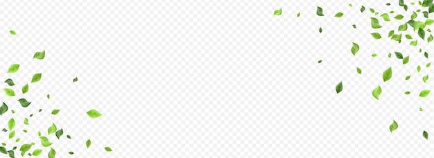 Лесная зелень дерево, изолированные на прозрачном фоне