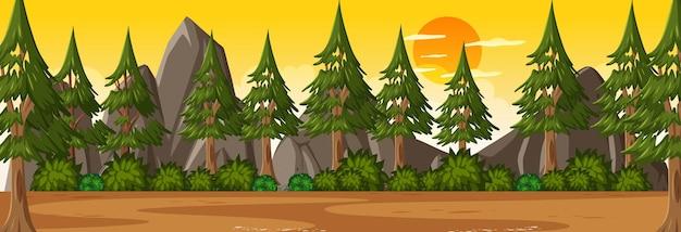 多くの松の木の背景と日没時の森の水平方向のシーン