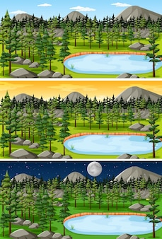 Forest landscape in different time in a day