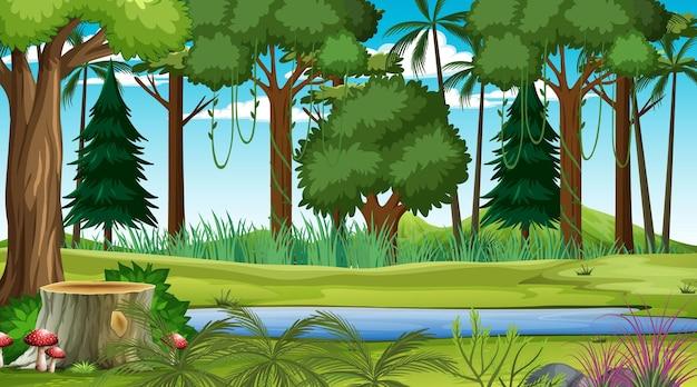 많은 다른 나무와 낮 시간에 숲 풍경 장면