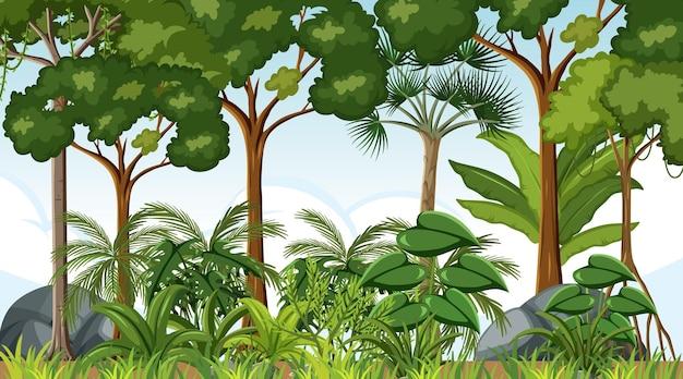 많은 나무와 낮 시간에 숲 풍경 장면