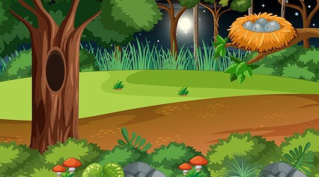 나뭇 가지에 둥지와 함께 밤에 숲 풍경 장면