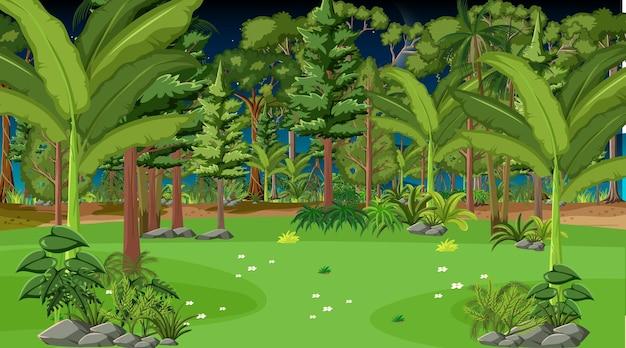 밤에 숲 풍경 장면