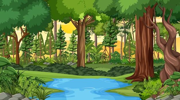 많은 다른 나무와 일몰 시간에 숲 풍경 장면
