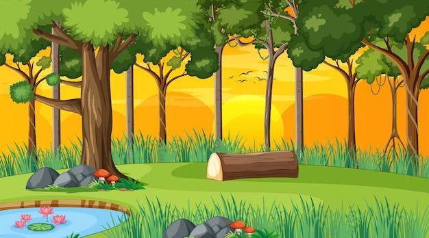 Лесной пейзаж во время заката с множеством разных деревьев