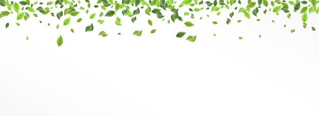 Лесные листья дерево вектор панорамный белый фон границы. ветка весенней листвы. лаймовая зелень абстрактный дизайн. брошюра leaf fresh.