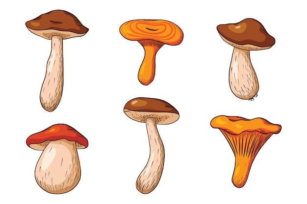숲 버섯 컬렉션입니다. 손으로 그린 식용 버섯 세트입니다. 흰 버섯, niscalo, boletus, 살구. 로고, 메뉴, 인쇄, 스티커, 디자인 및 장식을 위한 벡터 그림입니다. 프리미엄 벡터