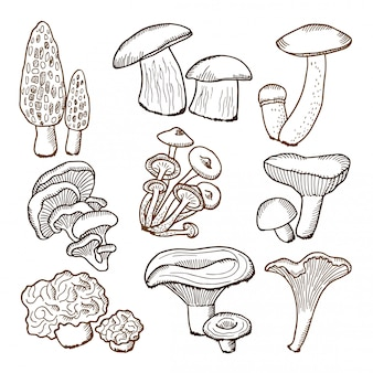 Forest mushrooms in hand drawn style.