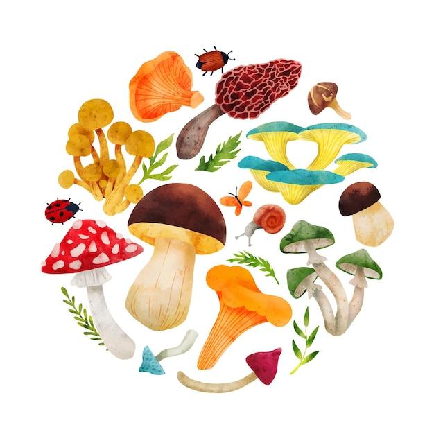 Лесные грибы рисованной векторные акварельные иллюстрации Premium векторы