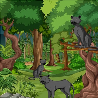 Forest or rainforest scene with black panther family