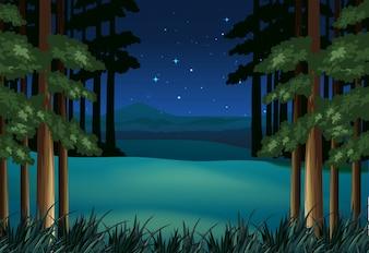 Лесная сцена ночью со звездами