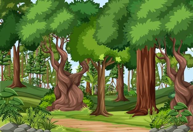 하이킹 트랙과 많은 나무가있는 숲 현장
