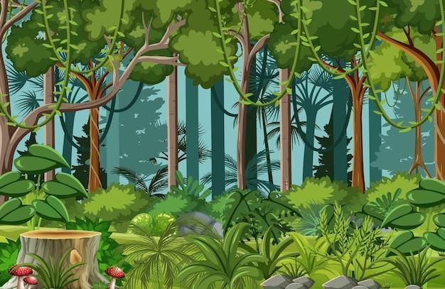 리아나와 많은 나무가있는 숲 현장