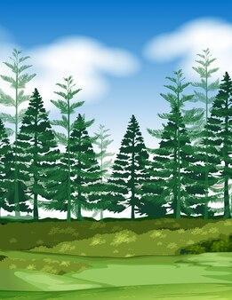松の木と森のシーン