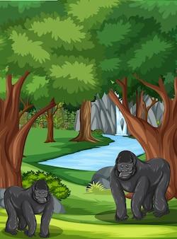 2つのゴリラとたくさんの木がある森のシーン
