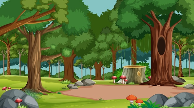 다양한 숲 나무와 숲 현장
