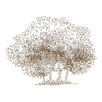 Forest tree group icon. hand drawn and outline illustration of forest tree group vector icon for web design