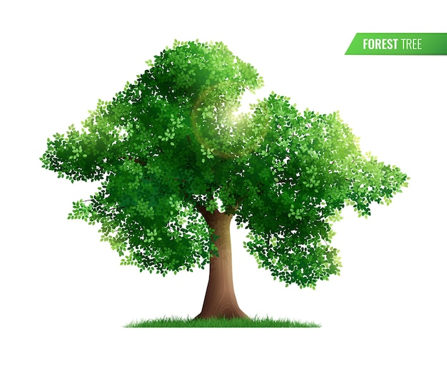 Forest tree isolated