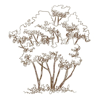 Forest young trees icon. hand drawn and outline illustration of forest young trees vector icon for web design