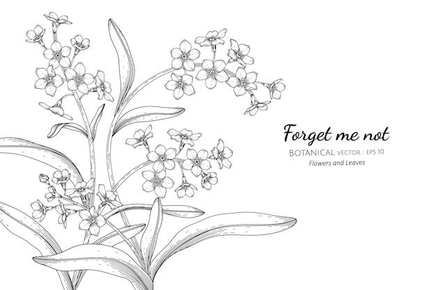 Забудьте меня не цветы и листья рисованной ботанические иллюстрации с штриховой графикой.