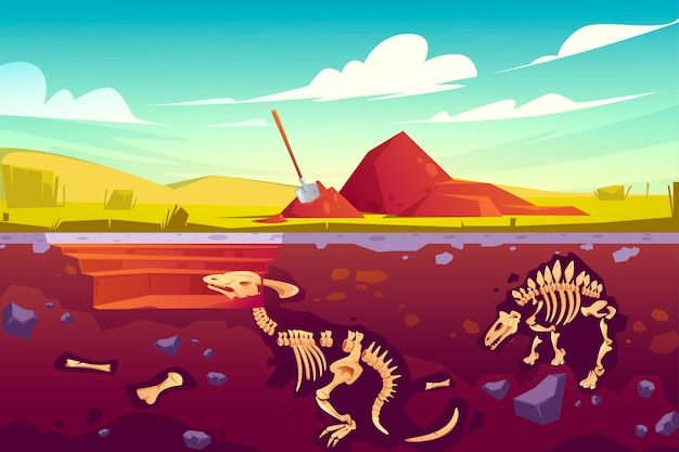 Fossil dinosaurs excavation, paleontology works