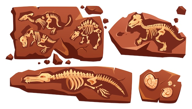 Fossil dinosaurs skeletons, buried snails shells, paleontology finds. cartoon illustration of stone sections with bones of prehistoric reptiles and ammonites isolated on white background