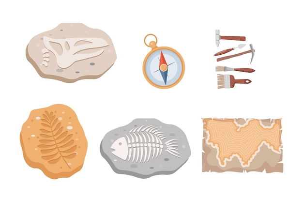 Fossil fish and dinosaurs skeletons and plants compass map and