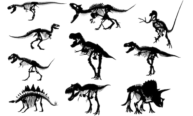 Fossils of dinosaur silhouette