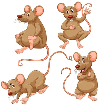 Four brown mouse on white background illustration