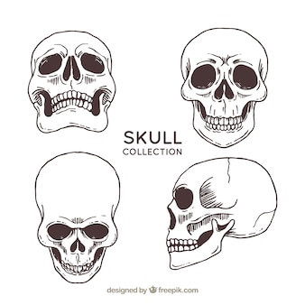 Four hand drawn skulls