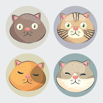 Four heads cats