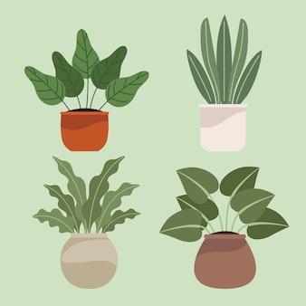 냄비에 4 개의 관엽 식물