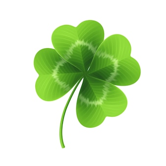 Four leaf clover isolated on white.  illustration