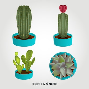 Four realistic cactus illustrated, isolated