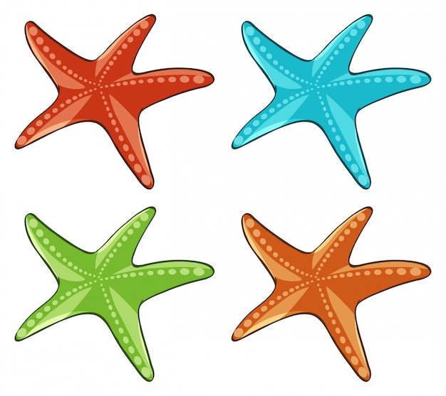 Four starfish in different colors